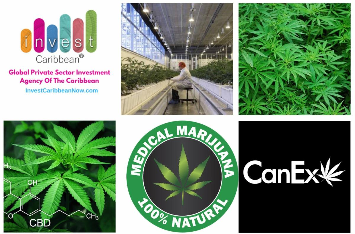 Invest Caribbean Partners With CanEx Capital Connection To Boost Financing In The Cannabis Sector – My Vue News
